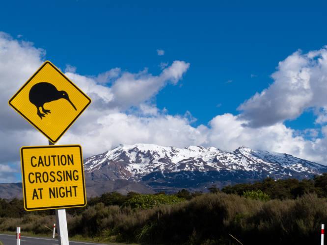 Kiwis sind typisch für Neuseeland.