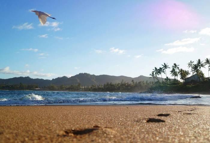 Strand, Palmen, ein Vogel fliegt am Himmel.