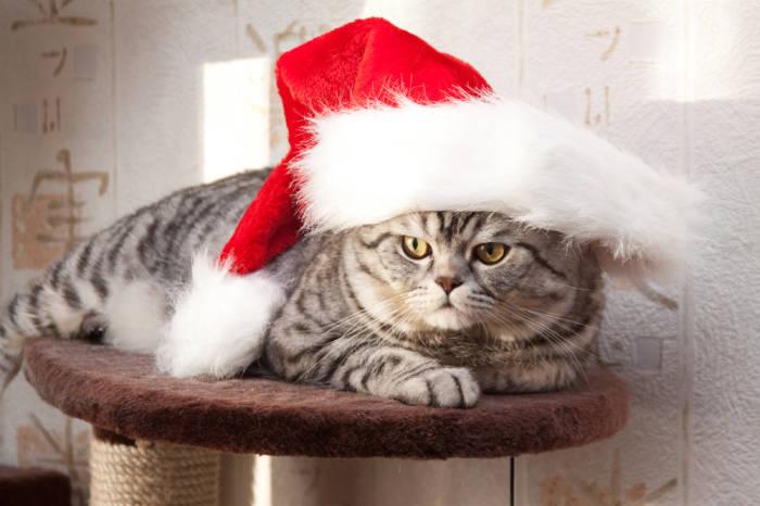Nicht die Laune an Weihnachten verderben lassen!