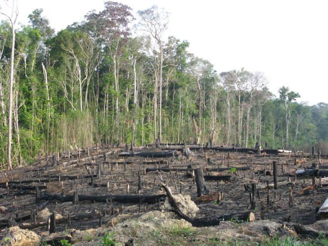Regenwald abgeholzt