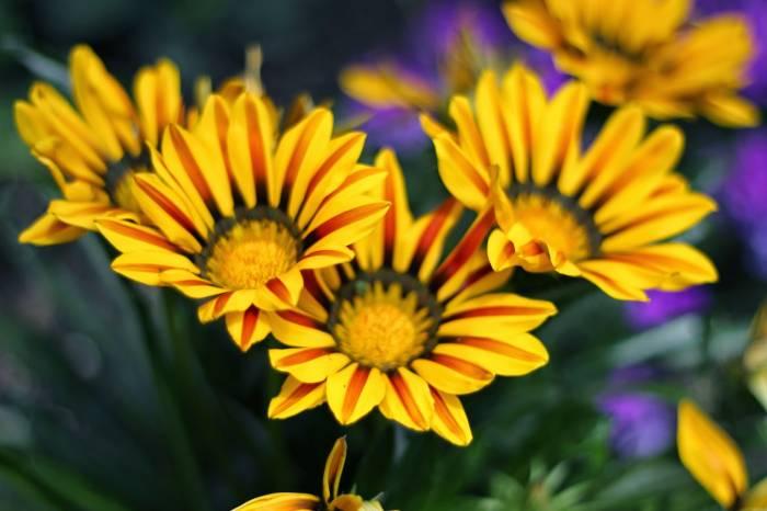 Blumenbild von Janine