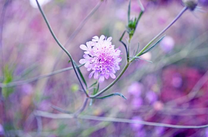 Blumenbild von Sabrina
