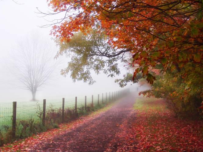 Weg Herbst