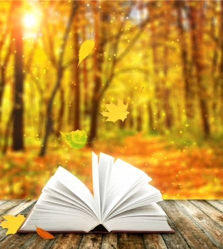 Buch-in-Natur