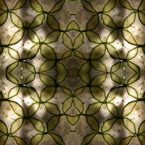 Das selbstgemachte Gurkenpapier hat ein beeindruckendes Muster!